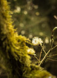 Tree overgrown with moss and a flower. In autumn Stock Photography