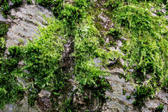 Tree overgrown with moss Stock Image