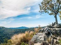 Tree Overlooking Shenandoah Royalty Free Stock Photo