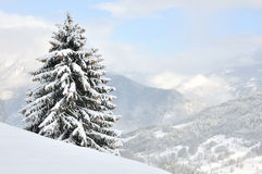 A tree overlooking the snowy mountain Royalty Free Stock Image