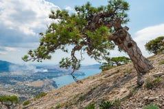 Tree på bergssidan arkivbild