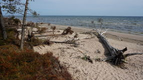 Tree på en strand Royaltyfri Foto