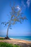 Tree på en strand Arkivbilder