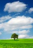 Tree på grönt fält 库存照片