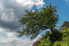 Tree på klippan Royaltyfri Foto