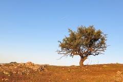 Tree på kullen royaltyfria foton