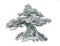 Tree på kullen Royaltyfri Foto