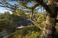 Tree på Longet Beach Arkivfoto