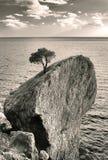 Tree på rock Royaltyfri Foto