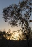 Tree på solnedgången Arkivbild