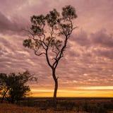 Tree på solnedgången Fotografering för Bildbyråer