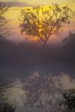 Tree på solnedgången Royaltyfri Foto