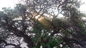 Tree på soluppgången Arkivbilder