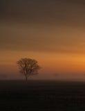 Tree på soluppgången Arkivfoto