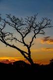 Tree på soluppgången Arkivfoton