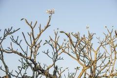 Tree på soluppgången Royaltyfri Foto