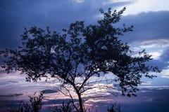 Tree på soluppgången Härligt landskap i rosa färg- och lilasignaler Arkivfoto
