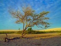 Tree på stranden arkivfoto