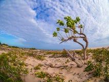 Tree på stranden royaltyfri fotografi