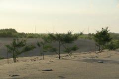 Tree på stranden Royaltyfria Bilder