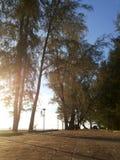 Tree på stranden Fotografering för Bildbyråer