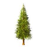 Tree på vit bakgrund Royaltyfria Bilder