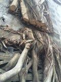 The Tree Stock Photography
