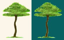 Tree paint brush isolate has clipping paths. Tree paint brush isolate white and turquoise background for matching with your image, has clipping paths Stock Images