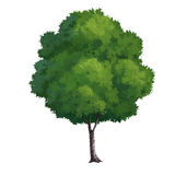 Tree paint Stock Image