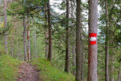 A tree painted in red and white in Austria Royalty Free Stock Photography