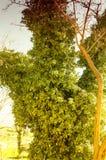 Tree Painting Royalty Free Stock Photos