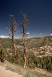 Tree Pair Stock Photography