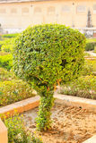 Tree, Palace and garden. Amber Fort, the Palace-fortress in India Royalty Free Stock Photo