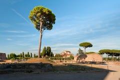 Tree at the Palatine Hill Royalty Free Stock Photos