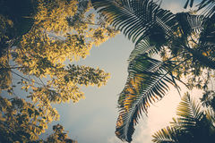 Tree and palm leaves Royalty Free Stock Image