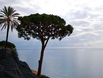 Tree and palm silhouettes. Tree and palm growing on cliff silhouettes against seascape in cloudy day Stock Images