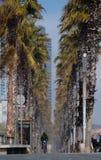 Tree, Palm Tree, Arecales, Date Palm Royalty Free Stock Photos