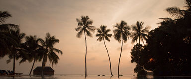 Tree palms in sunset scenary Stock Image