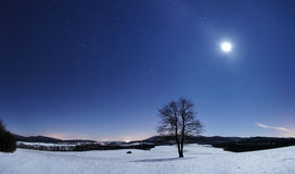 Tree panorama at winter night Royalty Free Stock Images