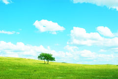 Tree in panoramic countryside Stock Photo