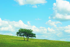 Tree in panoramic countryside Stock Image