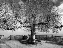 Tree on panoramic place Royalty Free Stock Photo