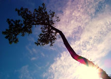 Tree of the paradise. Tree, sky, concept, imagination Stock Photography
