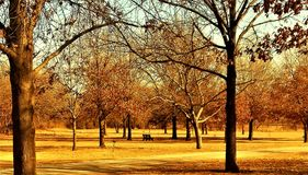 Tree paradise Stock Image