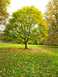 Tree in the Park Royalty Free Stock Photography