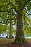 A tree in the park Royalty Free Stock Photography