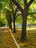 A tree in the park. Autumn alley Stock Photo