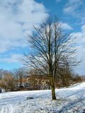 Tree in park Stock Photography