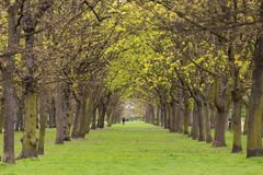 Tree park alley Royalty Free Stock Image