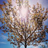 Tree in park. Artistic look in vintage vivid colours. Stock Image